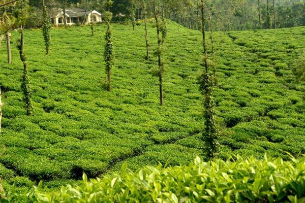 Coorg & Wayanad Honeymoon Tour Package From Bangalore | Best