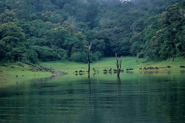 Thekkady Wildlife Sanctuary Tourist Attraction